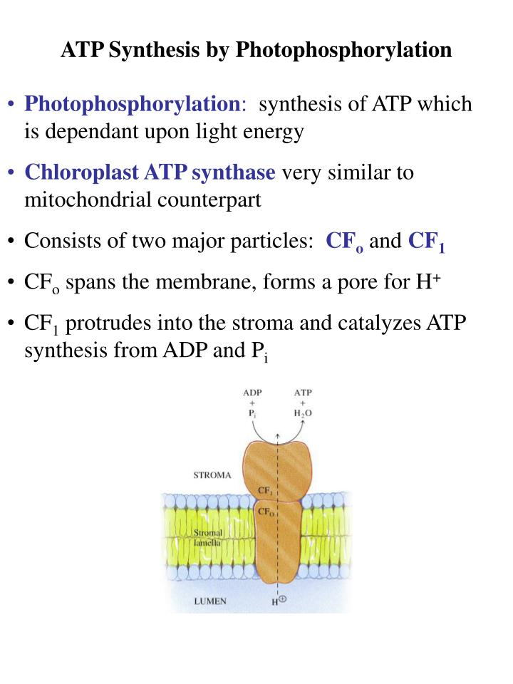 ATP Synthesis by Photophosphorylation