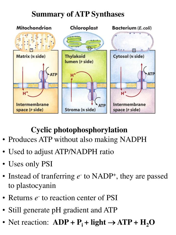 Summary of ATP Synthases