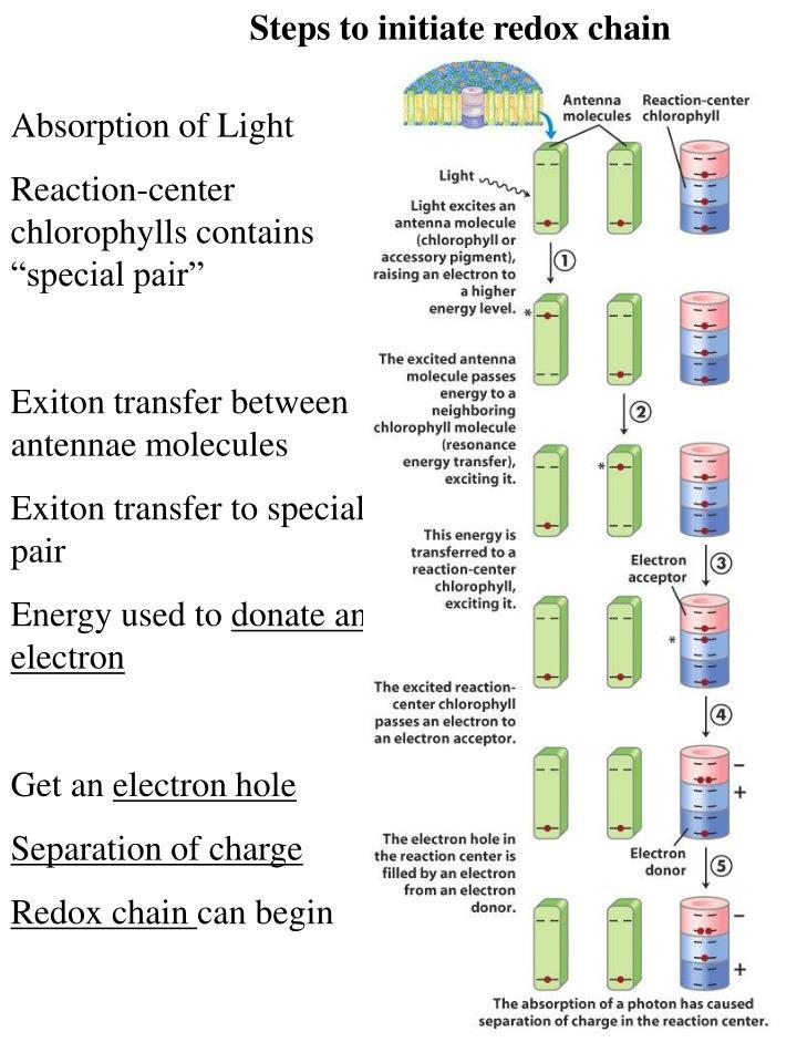 Steps to initiate redox chain