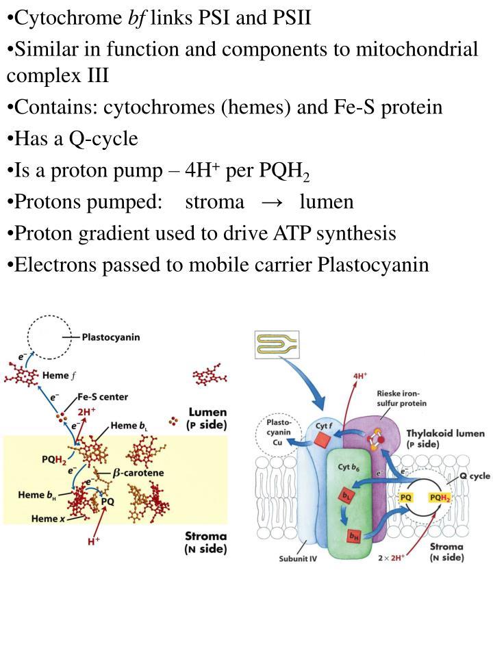 Cytochrome
