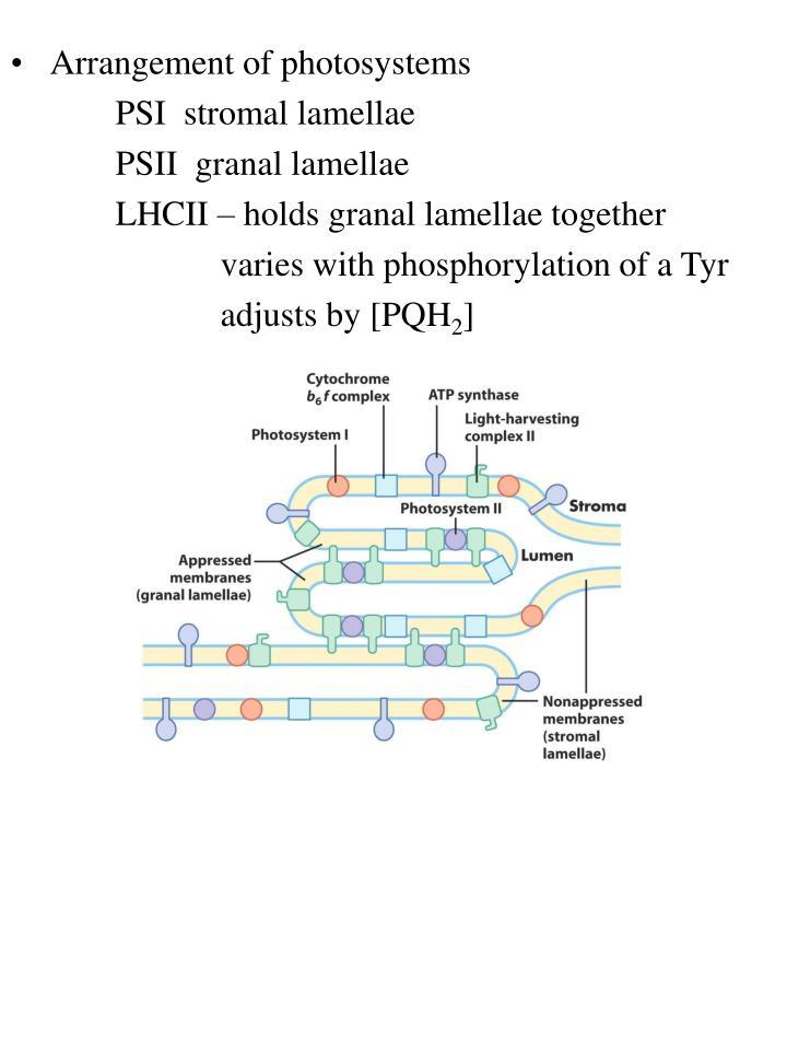 Arrangement of photosystems