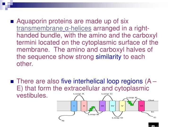 Aquaporin proteins are made up of six