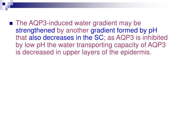 The AQP3-induced water gradient may be
