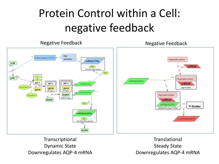 Protein Control within a Cell: