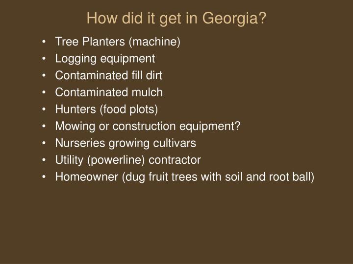 How did it get in Georgia?