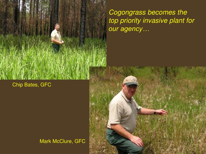 Cogongrass becomes the top priority invasive plant for our agency…