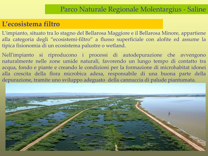 Parco Naturale Regionale Molentargius - Saline