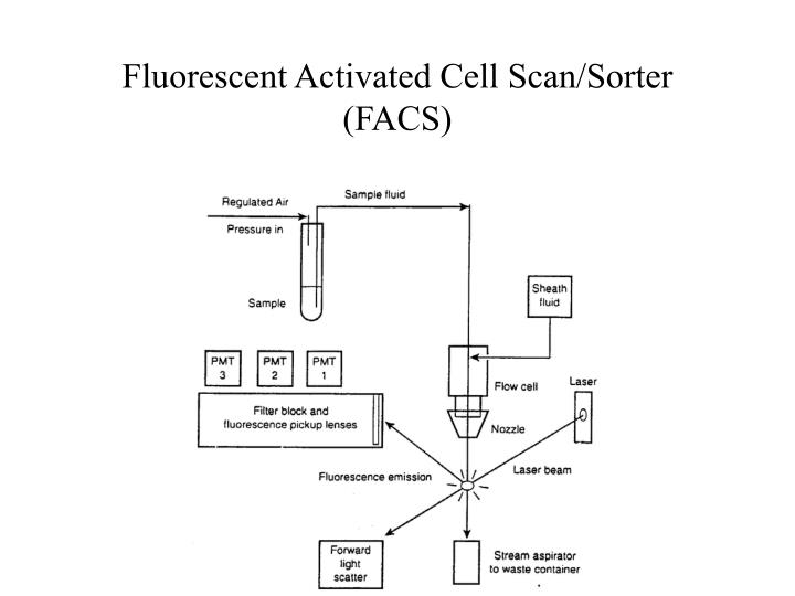 Fluorescent Activated Cell Scan/Sorter (FACS)