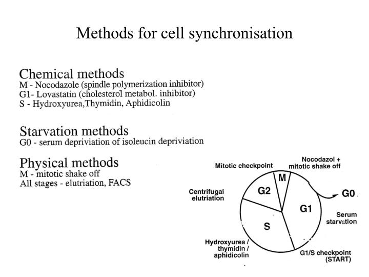 Methods for cell synchronisation