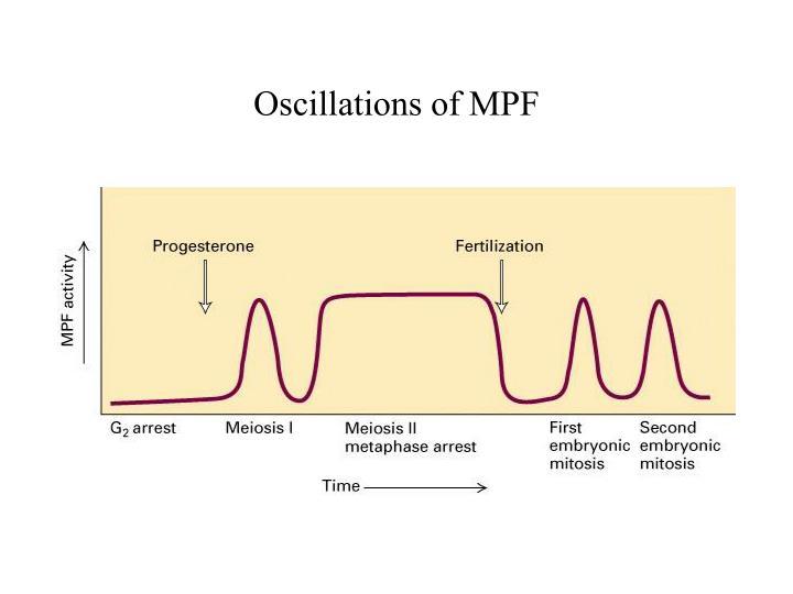 Oscillations of MPF