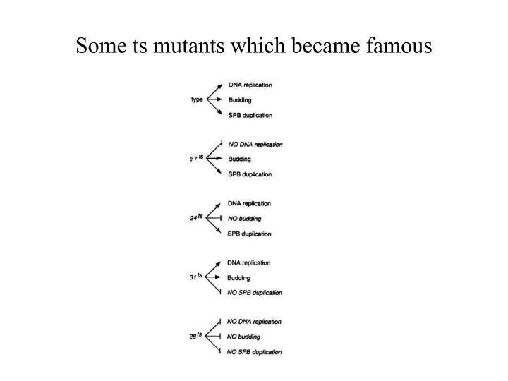 Some ts mutants which became famous