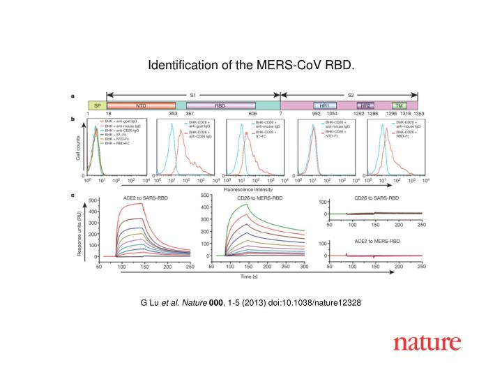 Identification of the MERS-CoV RBD.