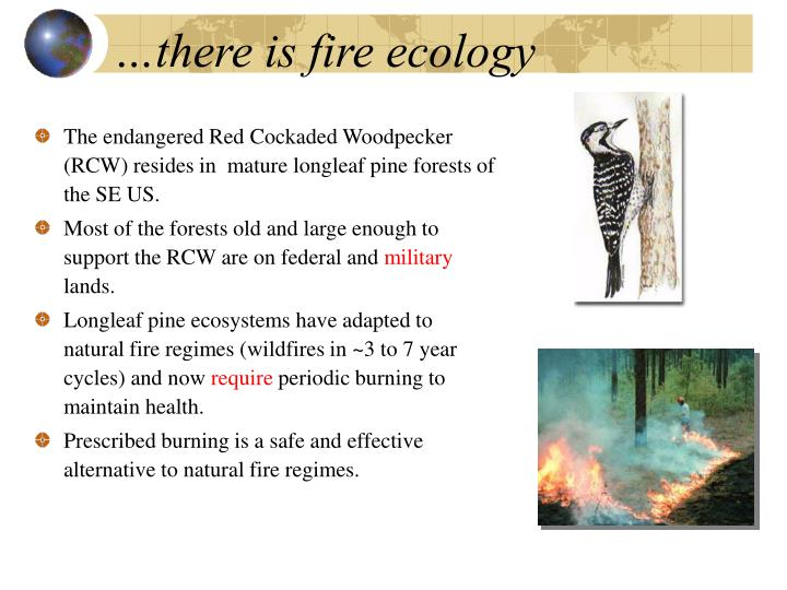 …there is fire ecology