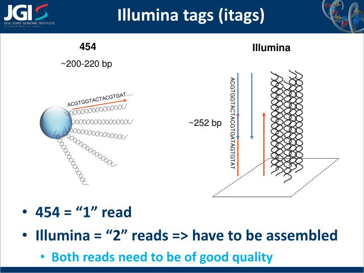 Illumina tags (itags)