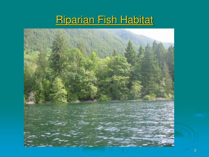 Riparian Fish Habitat