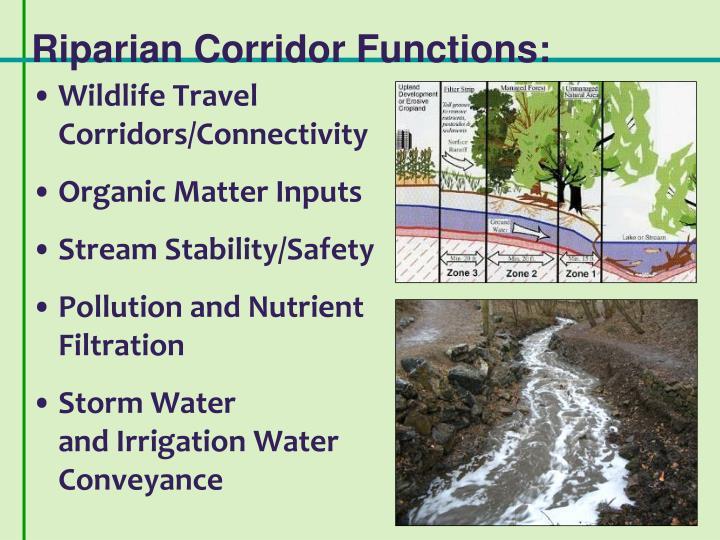 Riparian Corridor Functions: