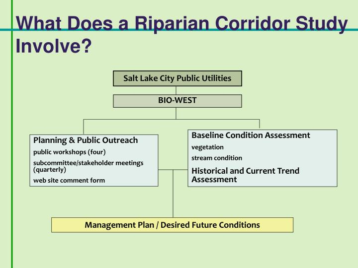 What Does a Riparian Corridor Study Involve?