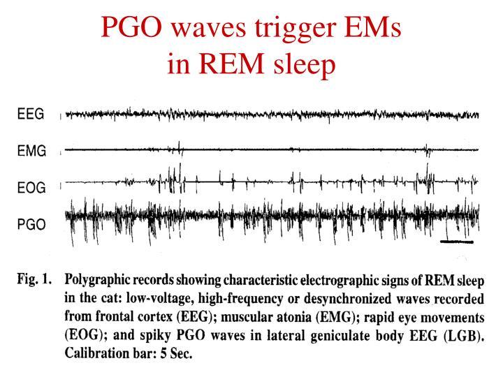 PGO waves trigger EMs