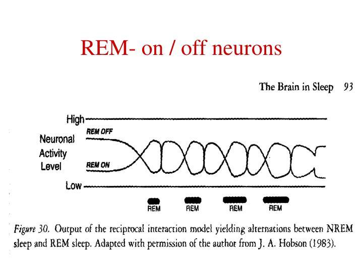 REM- on / off neurons