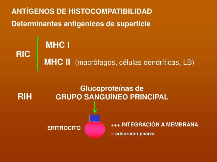 ANTÍGENOS DE HISTOCOMPATIBILIDAD
