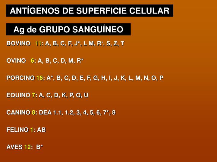 ANTÍGENOS DE SUPERFICIE CELULAR