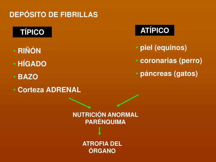 DEPÓSITO DE FIBRILLAS