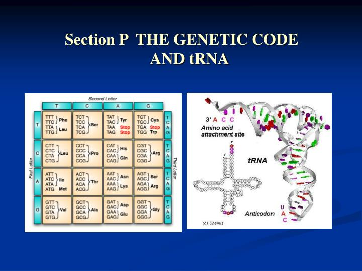 Section P  THE GENETIC CODE