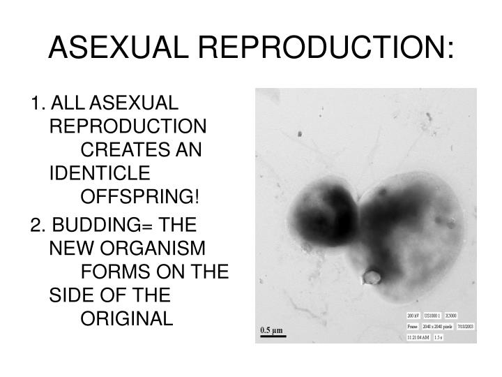 1. ALL ASEXUAL REPRODUCTION CREATES AN IDENTICLE OFFSPRING!