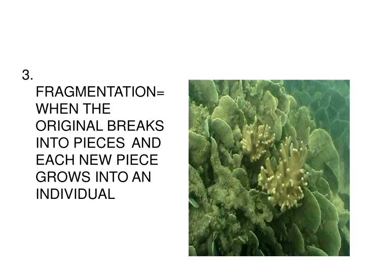 3. FRAGMENTATION=WHEN THE ORIGINAL BREAKS INTO PIECES AND EACH NEW PIECE GROWS INTO AN INDIVIDUAL