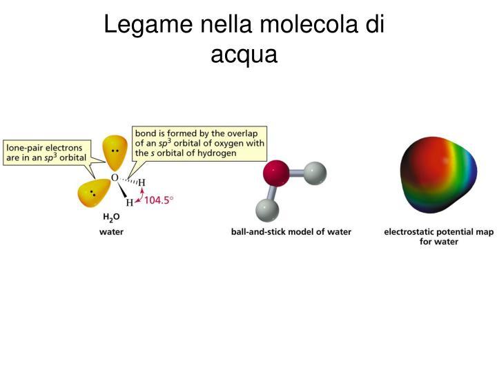 Legame nella molecola di acqua