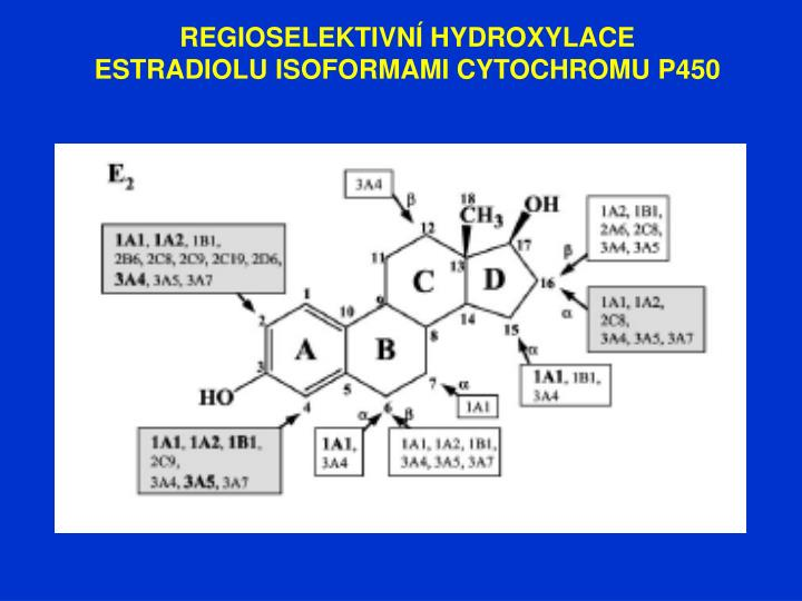 REGIOSELEKTIVNÍ HYDROXYLACE ESTRADIOLU ISOFORMAMI CYTOCHROMU P450