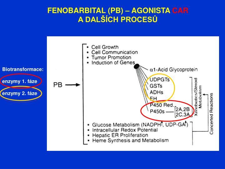 FENOBARBITAL (PB) – AGONISTA