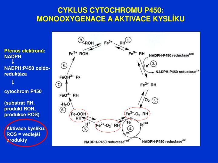 CYKLUS CYTOCHROMU P450: