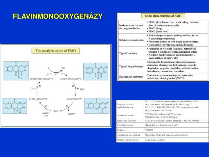 FLAVINMONOOXYGENÁZY