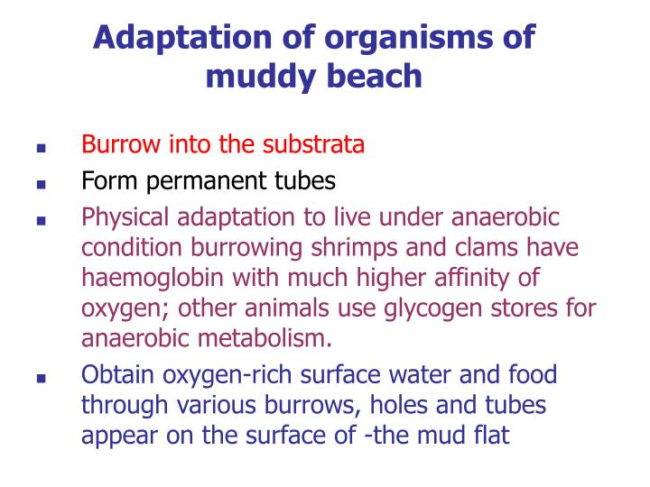 Adaptation of organisms of muddy beach