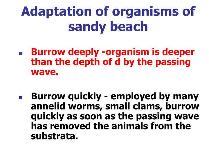 Adaptation of organisms of sandy beach