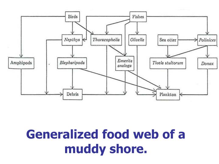 Generalized food web of a muddy shore.