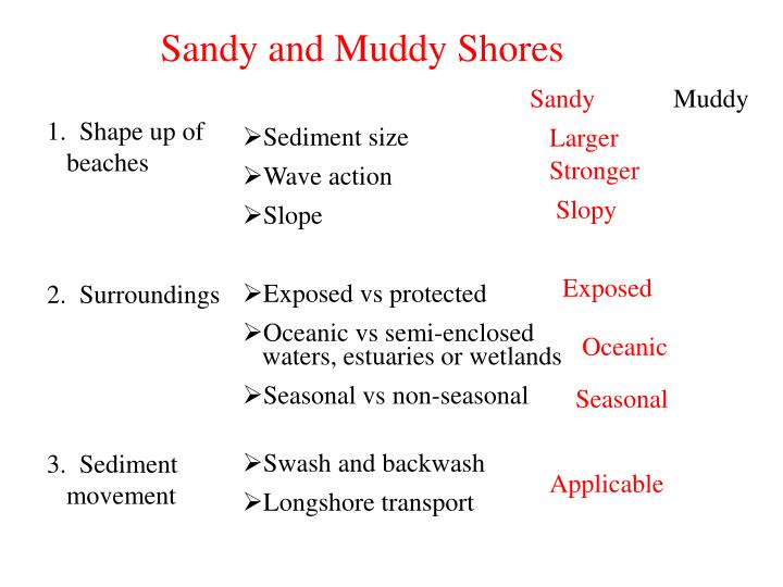 Sandy and Muddy Shores
