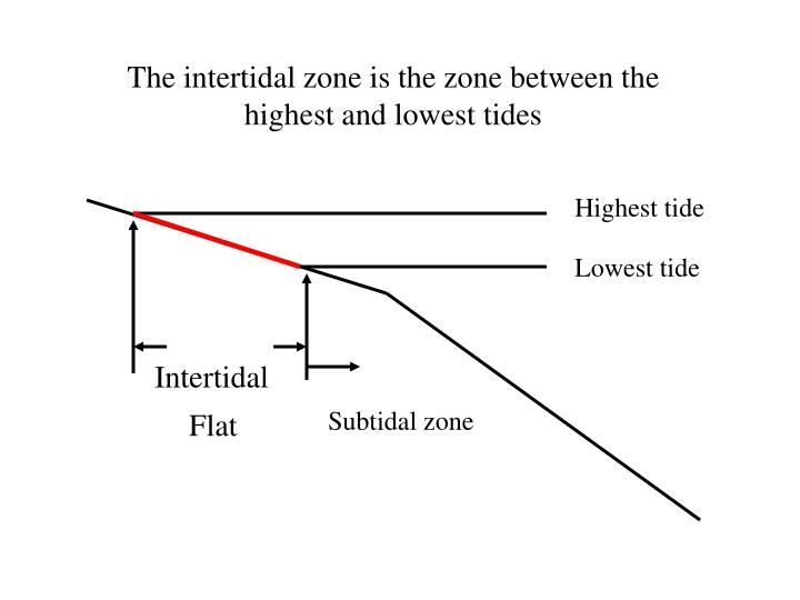 The intertidal zone is the zone between the highest and lowest tides