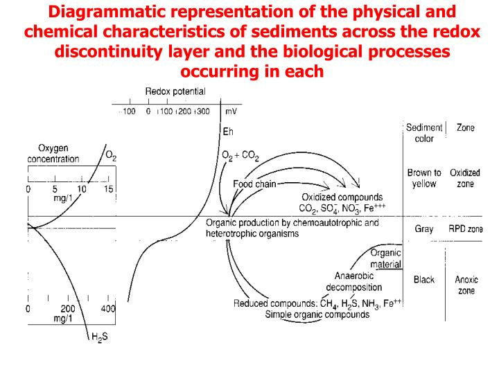 Diagrammatic representation of the physical and chemical characteristics of sediments across the redox discontinuity layer and the biological processes occurring in each