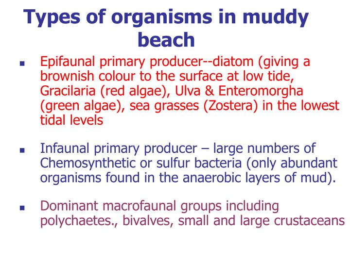 Types of organisms in muddy beach