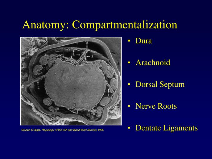 Anatomy: Compartmentalization