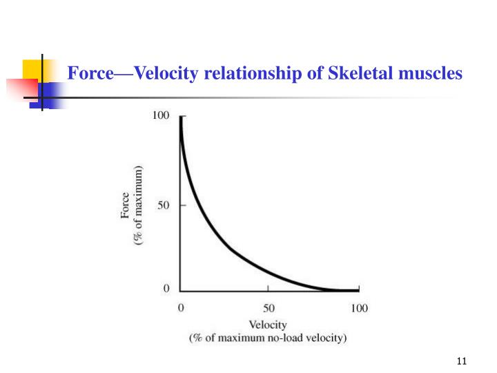 Force—Velocity relationship of Skeletal muscles