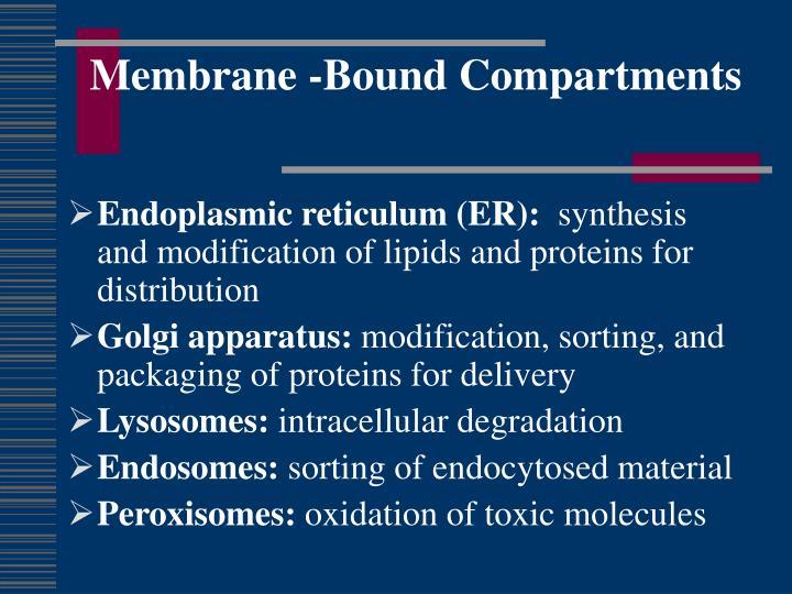 Membrane -Bound Compartments