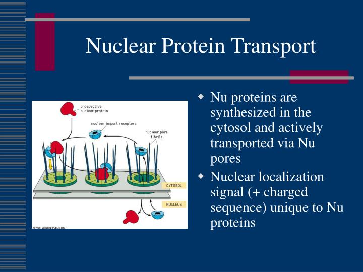 Nuclear Protein Transport