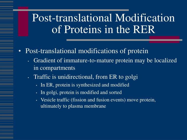 Post-translational Modification of Proteins in the RER