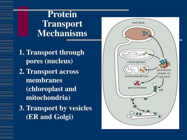 Protein Transport Mechanisms