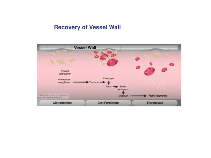 Recovery of Vessel Wall