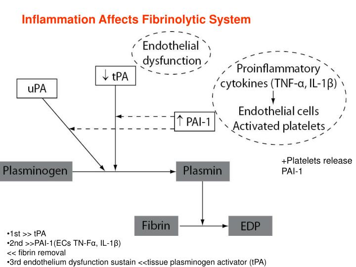 Inflammation Affects Fibrinolytic System