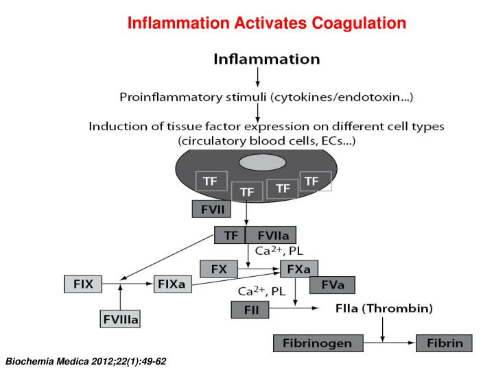 Inflammation Activates Coagulation